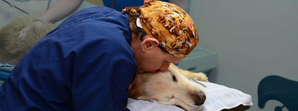 Christensen Animal Hospital in Wilmette IL